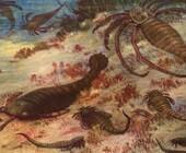 Fonte della foto: Curioctopus
