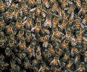 Fonte della foto: WWF