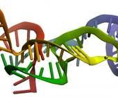 Fonte della foto: Le Scienze