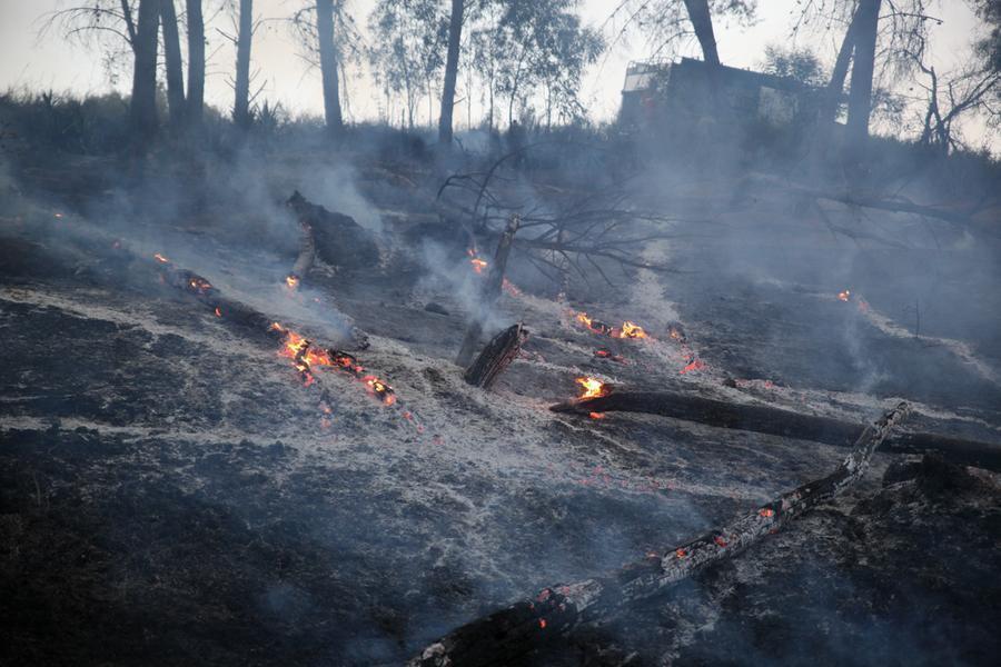 Incendi in Sicilia così crimine e inefficienze bruciano lisola