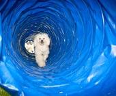 Fonte della foto: My Tube