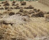 Fonte della foto: Puglia Positiva