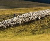 Fonte della foto: Agricoltura Oggi