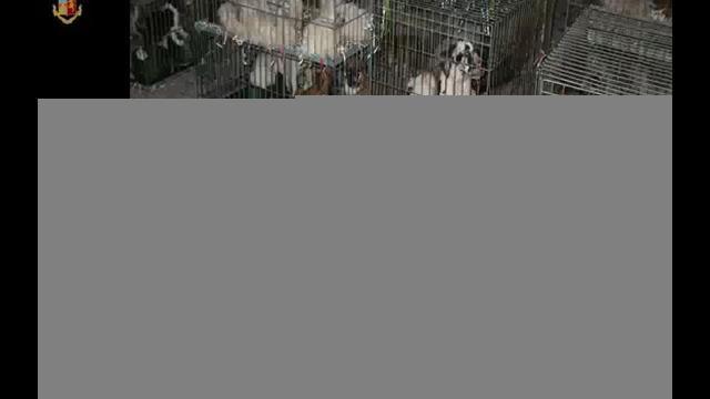 Animali: sgominato a Lodi traffico cuccioli di cane dall'Est