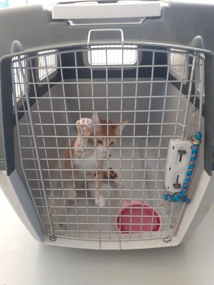 Lampedusa, il gatto-migrante ha trovato casa sull'isola
