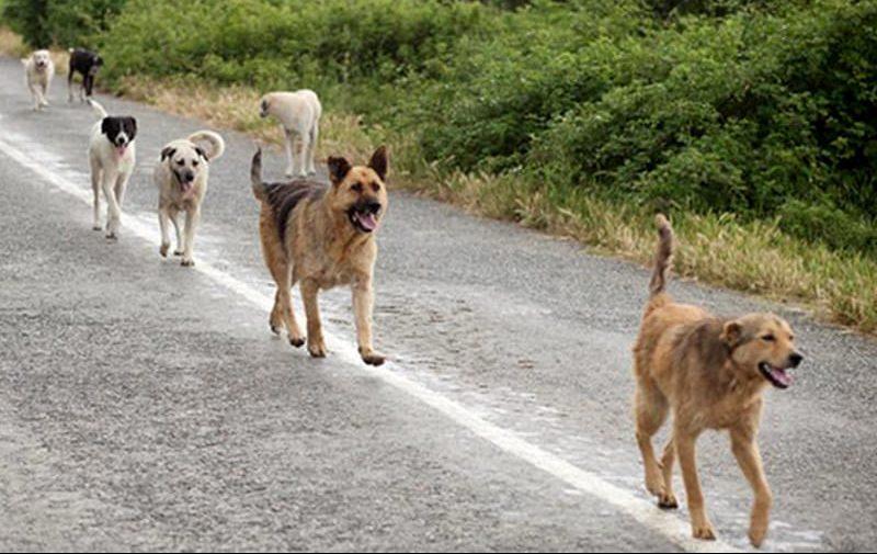 Caltanissetta Appello di Armando Turturici ai nisseni amanti dei cani