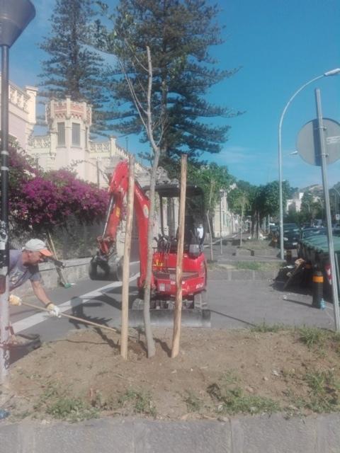 Ultimati gli interventi di nuove piantumazioni per l'alberatura di via T. Cannizzaro
