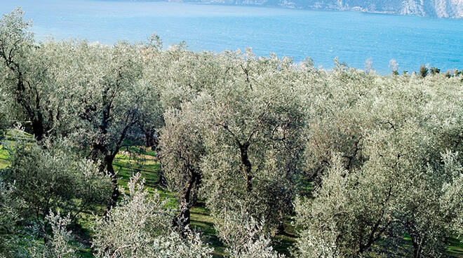 Turismo agricolo olio vino bando regionale mila euro