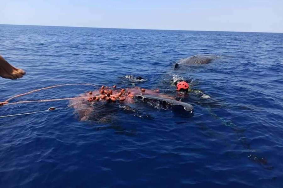 Capodoglio intrappolato da una rete di pesca illegale a Lipari