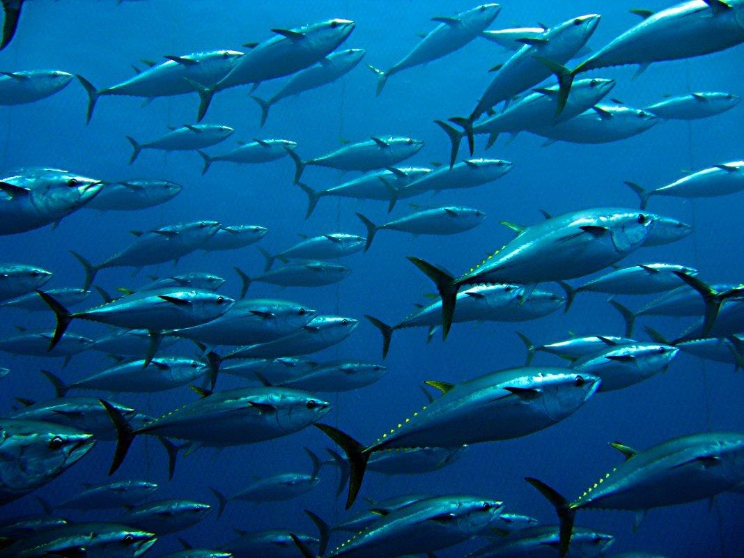 Palermo: quote tonno rosso, il ministero esclude le imbarcazioni siciliane