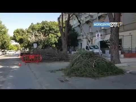 Ritenuti pericolosi, alberi abbattuti al Viale della Vittoria