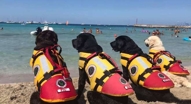 I cani bagnini nelle spiagge libere di Vulcano e Stromboli alla Plaia