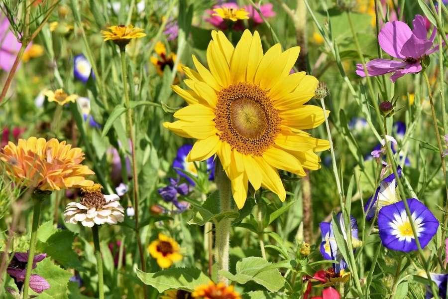 Scoperto il linguaggio dei fiori profumati: ecco come attirano insetti