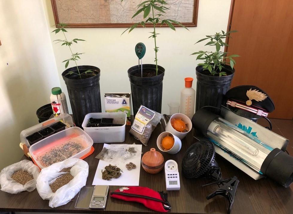 Ramacca, Ct,: coltivava la droga in casa, arrestato