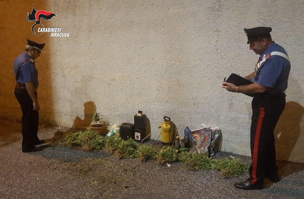 Scoperta piantagione di canapa a Lentini agricoltore denunciato