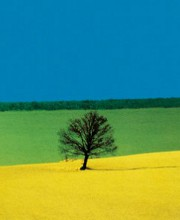 Franco Fontana - Full Color