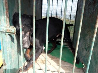 Bimbo morso da cane nel Catanese