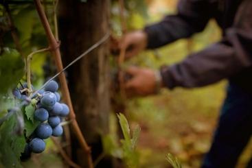 Fondi Ue: via libera a 4 programmi rurali Italia per 3,1 mld