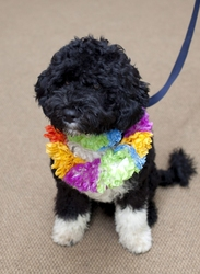 In Minnesota cane diventa sindaco