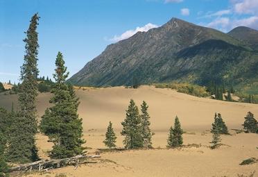 Canada. yukon: carcross desert, il deserto più piccolo del mondo (250