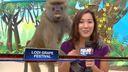 Scimmia palpa reporter in diretta