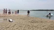 Squalo bianco spiaggiato: lo salvano i bagnanti