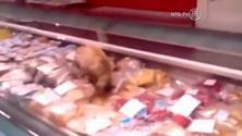 Gatto goloso di caviale manda in rovina il supermarket