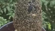 Il mistero dell'incantatore di api