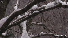 Neve in Giappone, e i macachi si fanno il bagno nelle terme