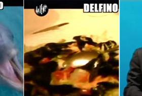 Le Iene: il delfino è servito nel piatto, in un ristorante del Lazio