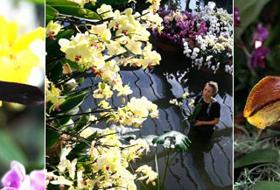 Come coltivare le orchidee: mini guida per chi ha il pollice nero