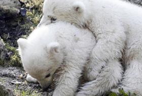 Gli orsetti gemelli dello zoo di Monaco hanno un nome