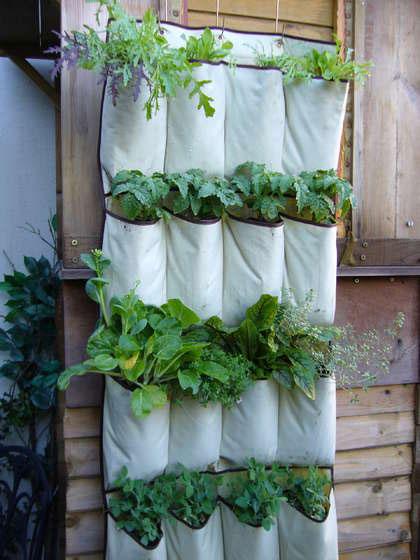 Tasche vegetali