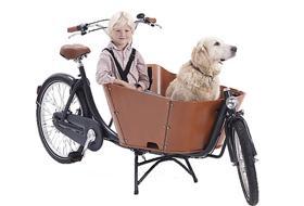 bici cesto