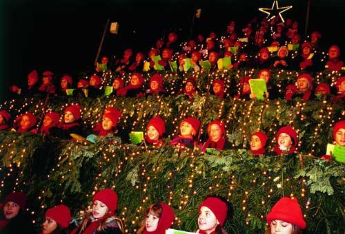 Albero di Natale vivente a Zurigo, Svizzera