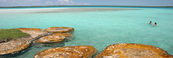 Bacalar mare 