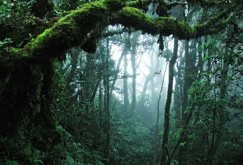 http://img.plug.it/sg/viaggi2008/upload/for/0000/foresta-pluviale-panama.jpg