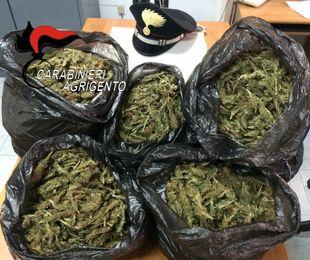 Coltivazione di marijuana, scattano tre condanne
