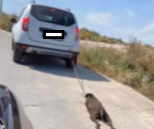 Inaudita violenza a Priolo, lega cane al paraurti e lo trascina: lo uccide